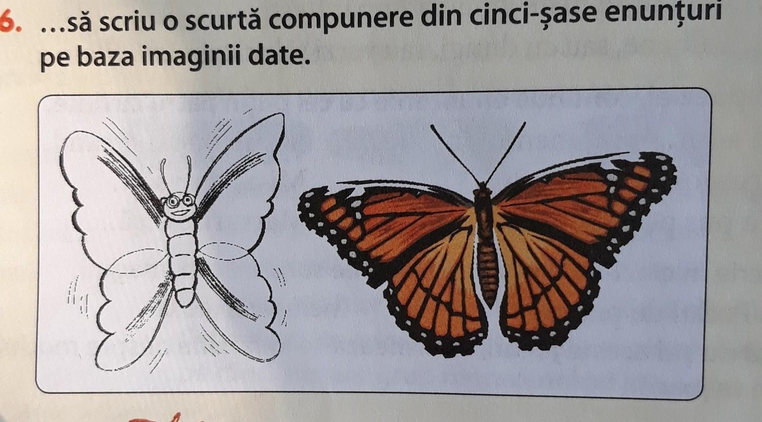 Mandala tricou de colorat Fluture
