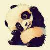 Panda6Roxy