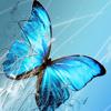 Butterfly181