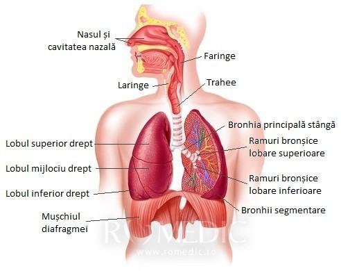 boli ale sistemului digestiv referat biologie