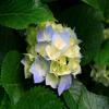 roxanaflorea