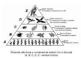 alcatuieste shunatic o piramida trofica - Brainly.ro